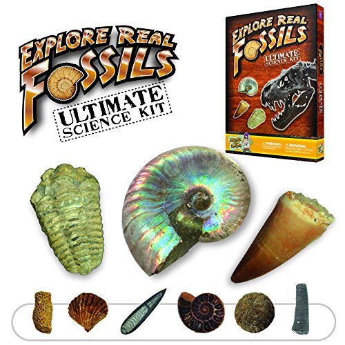 Ultimate Fossil Kit - Collect 15 Rare Fossil Specimens!