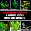 50+ stems / 6 species Live Aquarium Plants Package - Anacharis, Amazon and more! (50+ Gallon Aquariums)