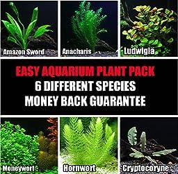 50+ stems / 6 species Live Aquarium Plants Package - Anacharis, Amazon and more! (50+ Gallon Aquariums)