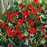 Suttons Seeds 123790 Nasturtium Princess of India Seed
