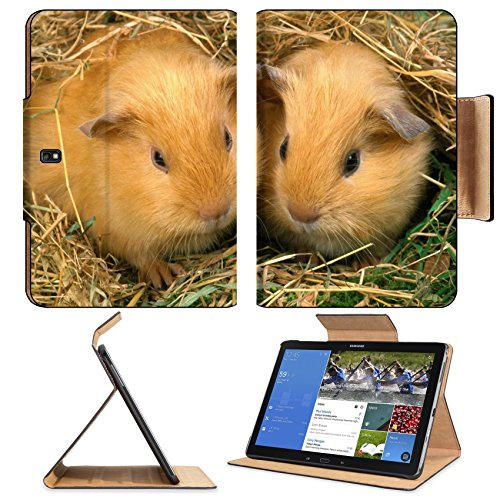 Best Guinea Pig Bedding 4722 front