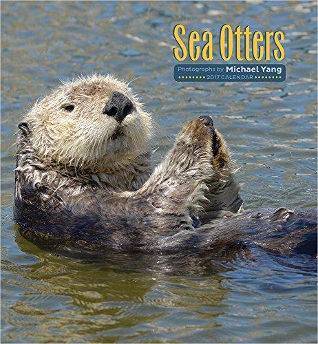 2017 Sea Otters Wall Calendar