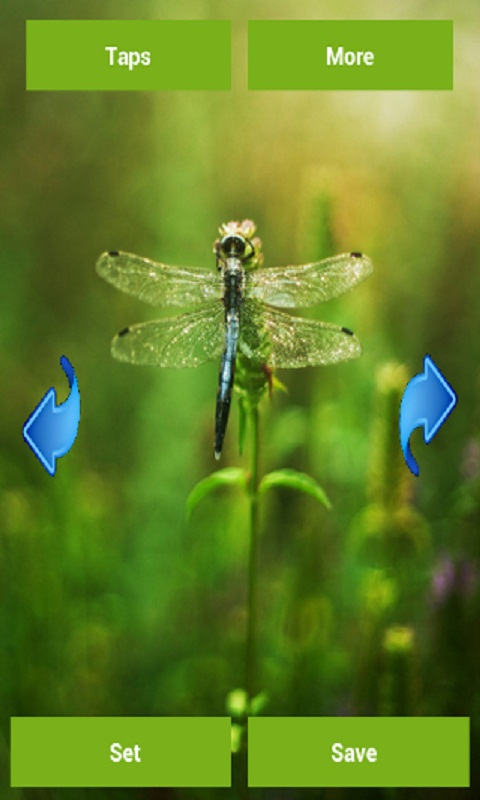 Dragonfly wallpapers appstore for android - Free dragonfly wallpaper for android ...