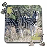 Angelique Cajam Safari Animals - South African 2 Zebras front view - 10x10 Inch Puzzle (pzl_20113_2)