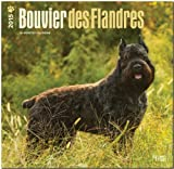 BrownTrout Publishers Ltd. Bouvier des Flandres 2015 Wall Calendar