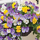 20seeds/bag Cold Wave Hanging Pansy Flower Seeds Flower Seeds Potted Plants Range Of Imported Seed