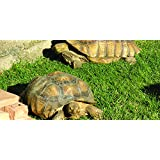 Nature's Seed PB-TORT-500-F Tortoise Forage Blend, 500 sq. ft.