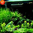 New Fresh Seeds 500 pcs/Pack Aquarium Grass Seeds Water Grasses Random Aquatic Plant Grass Indoor Beautifying Seeds,#EDN02Q