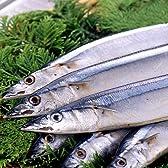 根室産秋刀魚合計10kg(約75尾~85尾入)