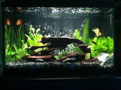 Petco frosted black aquarium gravel 5 lbs for Petco fish tank decor