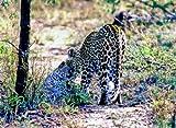 Image de Im Königreich der Raubkatzen: Cats of Prey [Blu-ray] [Import allemand]
