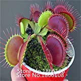 home & garden category Flytrap Seed Bonsai Potted Dionaea Muscipula Plant Seed Terrace Garden Carnivorous Plant Seed 1 Package 1