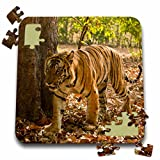 Danita Delimont - Tigers - Bandhavgarh Park, Bengal Tiger - AS10 JMC0019 - Joe and Mary Ann McDonald - 10x10 Inch Puzzle (pzl_132561_2)