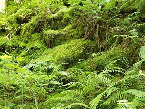 Lais Puzzle Bemooster Wald 2000 Teile