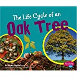The Life Cycle of an Oak Tree (Plant Life Cycles)