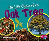 Linda Tagliaferro The Life Cycle of an Oak Tree (Plant Life Cycles)