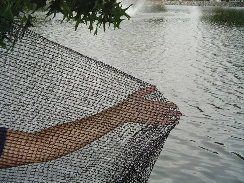 Dewitt pond netting 12 by 20 feet best garden report for Amazon fish ponds