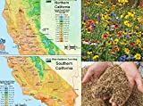 Search : California Wildflower Seed Mix, 1 Ounce