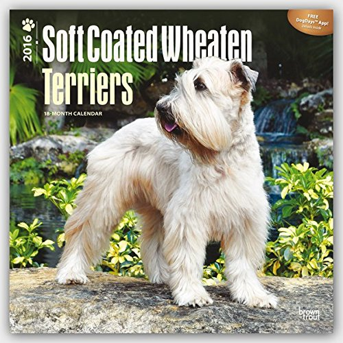 soft-coated-wheaten-terriers-2016-wheaten-terrier-18-monatskalender-mit-freier-dogdays-app-original-