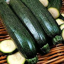 buy Squash,Squash Long Dark Green Seeds, Heirloom, Organic, 20 Seeds, Non Gmo .