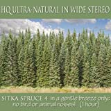 Sitka Spruce 4 in Gentle Breeze Only ( 1 Hour )