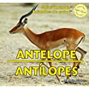 Antelope / Antilopes (Safari Animals / Animales De Safari)