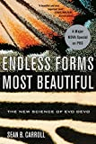 img - for Endless Forms Most Beautiful: The New Science of Evo Devo book / textbook / text book