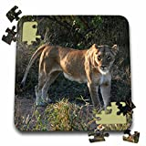 Angelique Cajam Big Cat Safari - South African Lioness side view - 10x10 Inch Puzzle (pzl_20126_2)