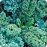 KALE , VATES BLUE CURLED SCOTCH KALE SEEDS, 50 SEEDS PER PACKAGE, ORGANIC , NON GMO, DELICIOUS IN SALADS