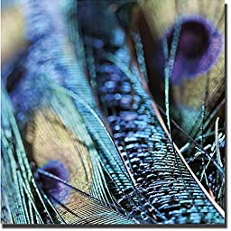 Peacock 1 by Joy Doherty Premium Gallery-Wrapped Canvas Giclee Art (Ready to Hang)