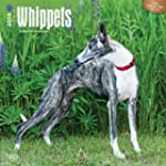 Whippets 2016 Square 12x12 Wall Calendar