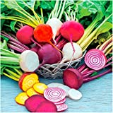 Package of 600 Seeds, Rainbow Mixed Beetroot (Beta vulgaris) Non-GMO Seeds By Seed Needs