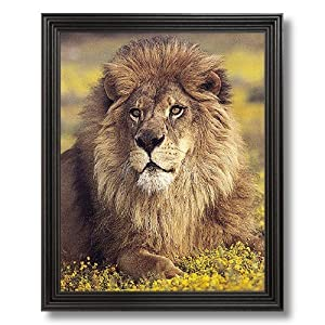 African Lion Sitting Flowers Animal Wildlife Picture Black Framed Art Print