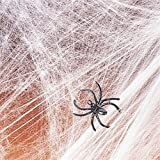Spider Web Streachable white with (2) Spiders Pkg/1 Picture