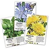 Dandelion Seed Packet Collection (3 Package Set) Non-GMO Seeds by Seed Needs