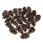 Frosted Pinecones - Set of 25