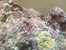 Live Rock 10 Pound Salt Water Fish Aquarium TOP QUALITY ROCKS OR YOUR $$$ BACK