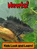 Newts! Learn About Newts and Enjoy Colorful Pictures - Look and Learn! (50+ Photos of Newts) (English Edition)