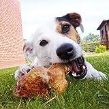 Kauwurzeln Gr: S das Dauer Kauspielzeug die Kauwurzel für Hunde Hund splittern nicht ohne irgendwelche Zusätze haben keine Kalorien sind hypoallergen das natürliches Hundespielzeug Kauknochen