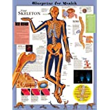 Blueprint for Health Your Skeleton Chart Laminated