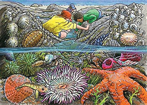 Cobble Hill Exploring the Seashore Jigsaw Puzzle, 35-Piece