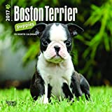 Boston Terrier Puppies 2017 Calendar