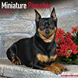 Avonside Publishing Miniature Pinscher 2015 Wall Calendar