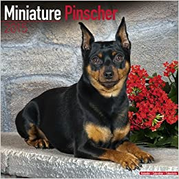 Miniature Pinscher Calendar - Breed Specific Miniature Pinscher