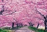 《ジグソーパズル》権現堂の桜並木