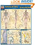 Skeletal System (Quickstudy: Academic)