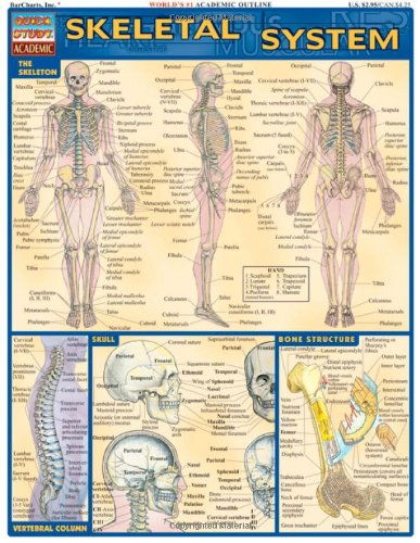 Skeletal System (Quickstudy: Academic) (Bar Charts English compare prices)