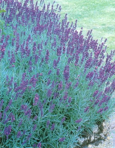 Top 10 Common Plants That Repel Mosquitoes And Other