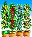 BALDUR-Garten Säulen-Obst-Kollektion Birne, Kirsche,...