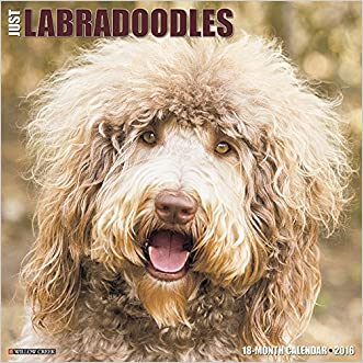 2016 Just Labradoodles Wall Calendar